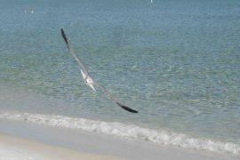IMG_5131 gull