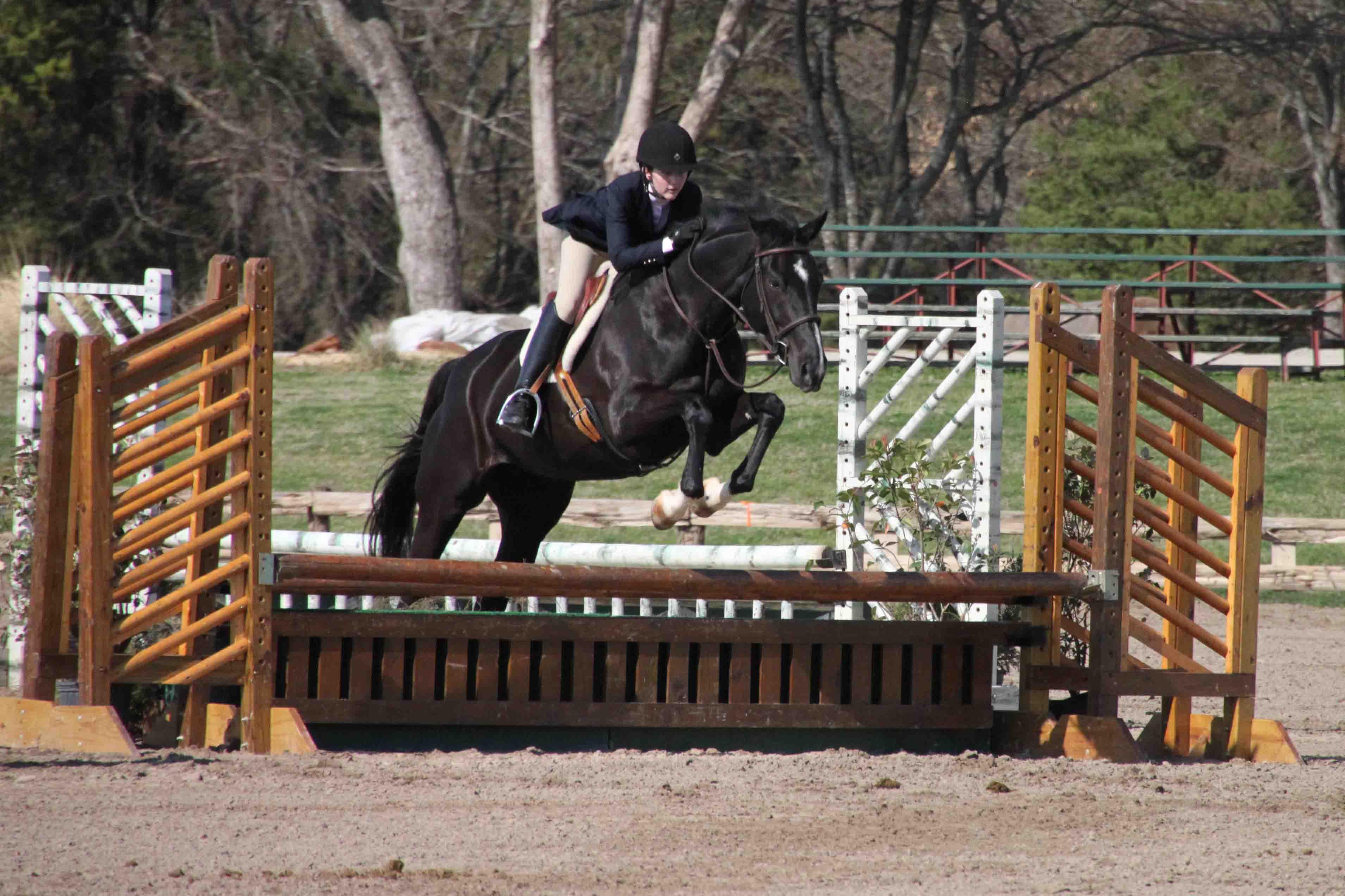 Black horses jumping - photo#25