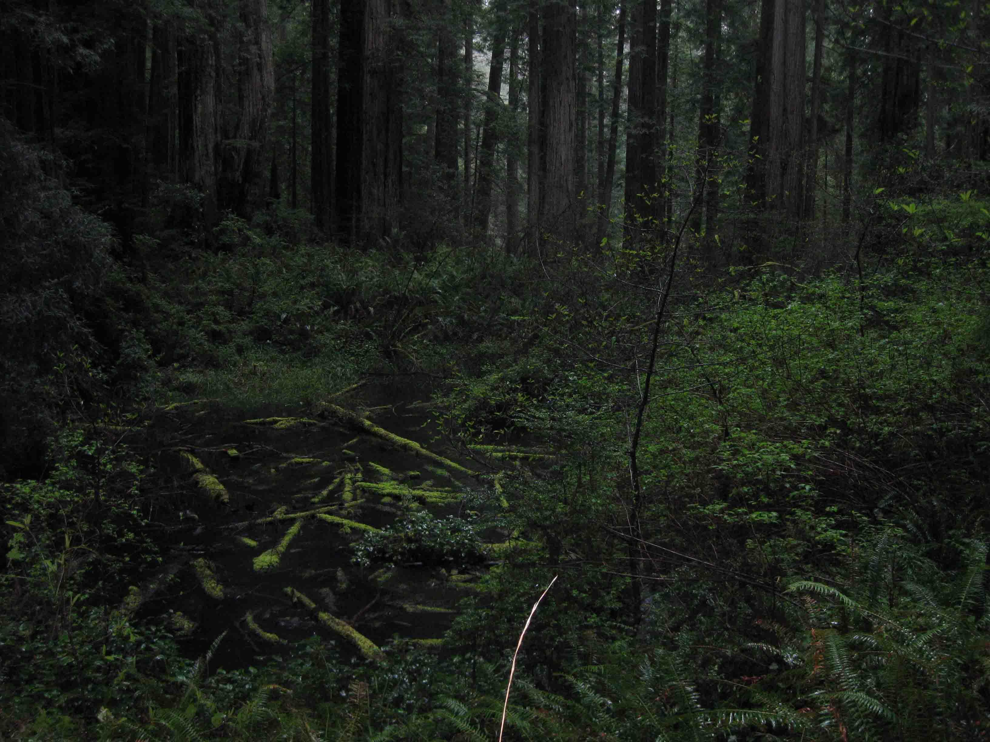 Dog Friendly Trails Redwood National Park