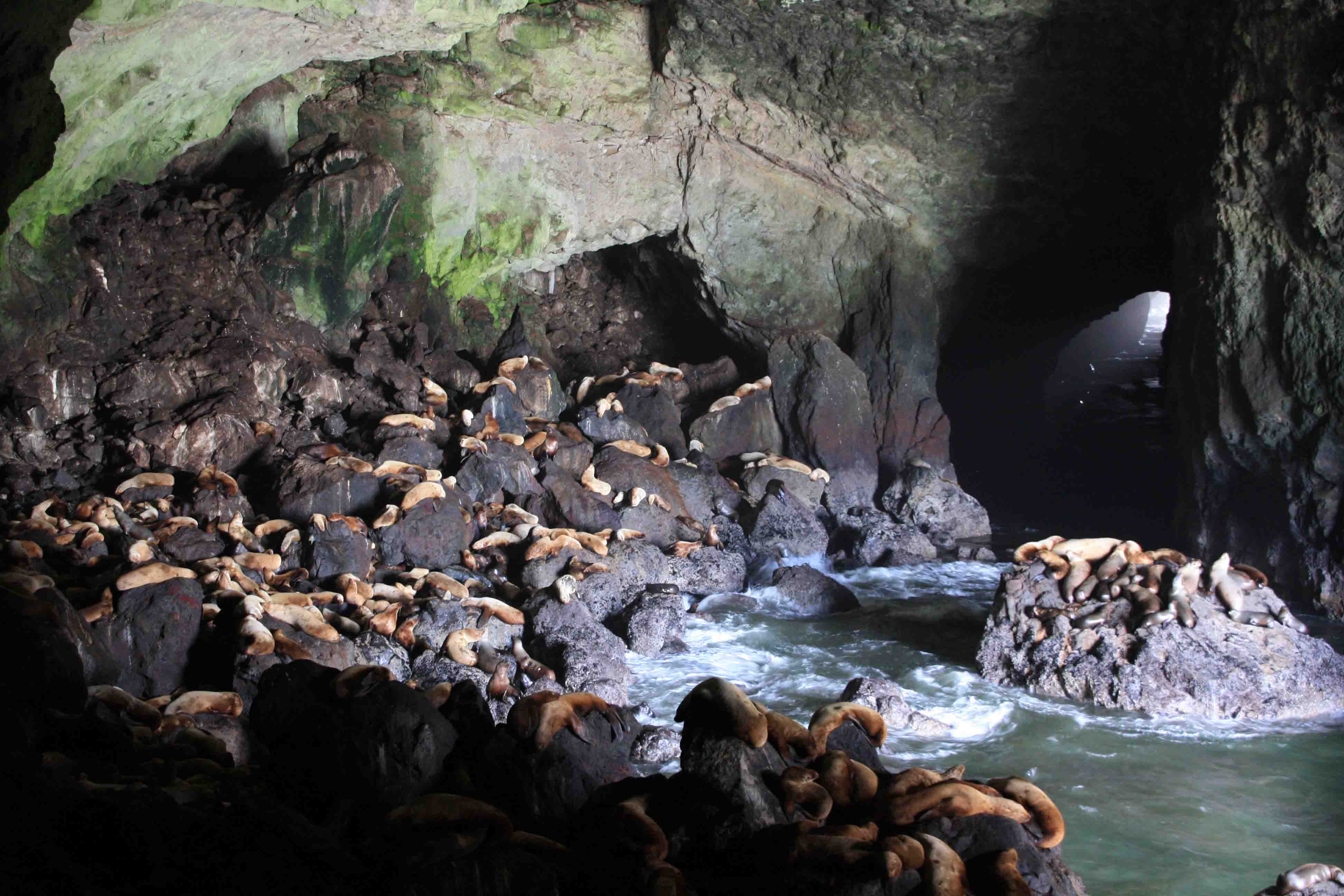O is for...Oregon Sea Lion Caves