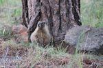IMG_7740 marmot