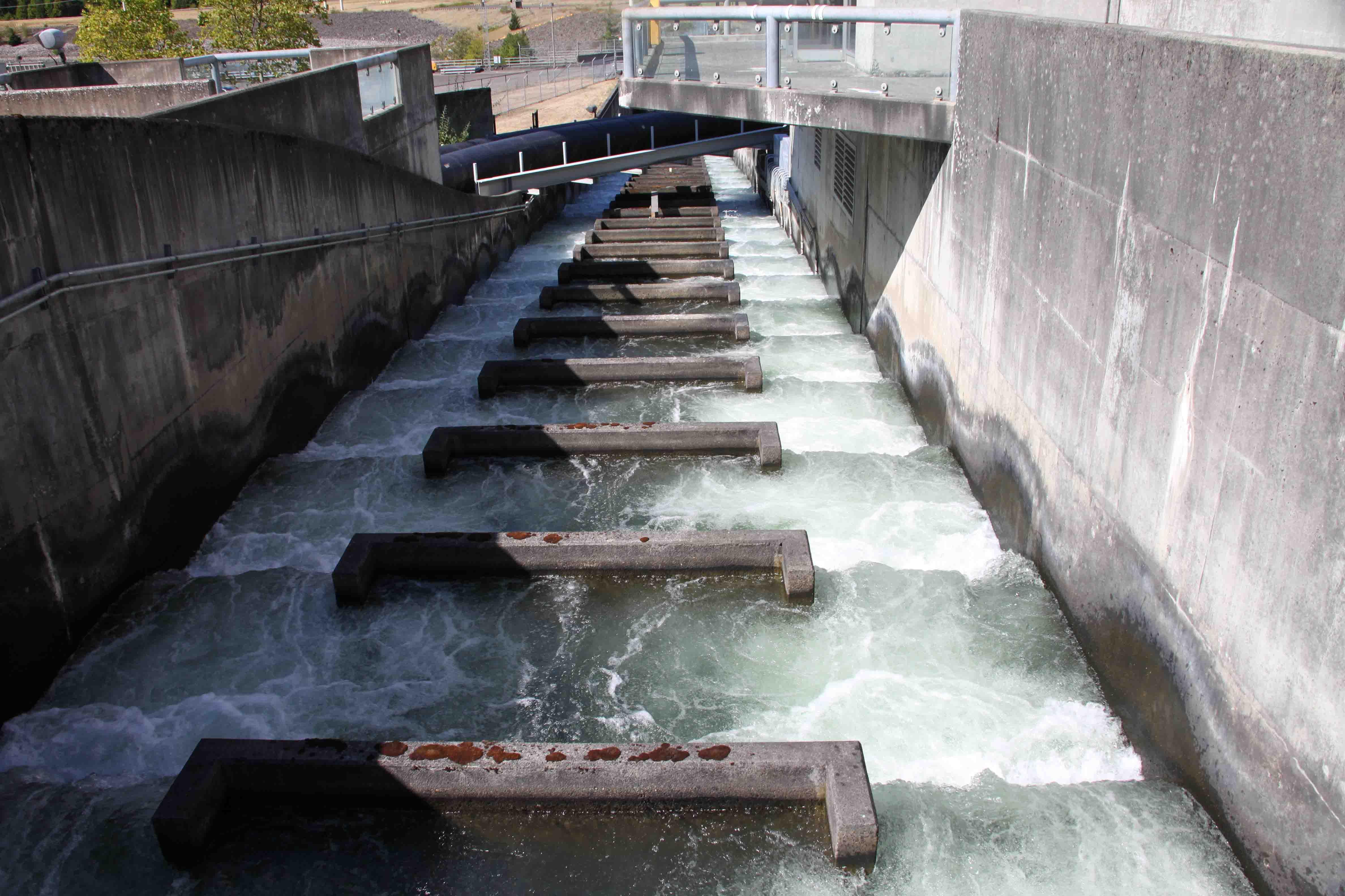 Bonneville dam etb travel photography for Columbia river fish counts