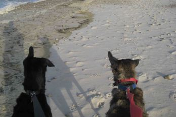 The wind was from the left (look at their ears!)