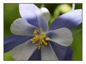Blue Columbine website copy