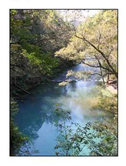 blue spring website copy