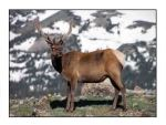 elk website copy