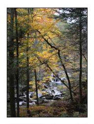 fall colors website copy