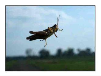 grasshopper website copy