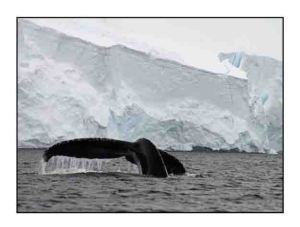 humpback whale website copy