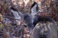 IMG_2574 deer