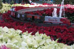 IMG_1042 train