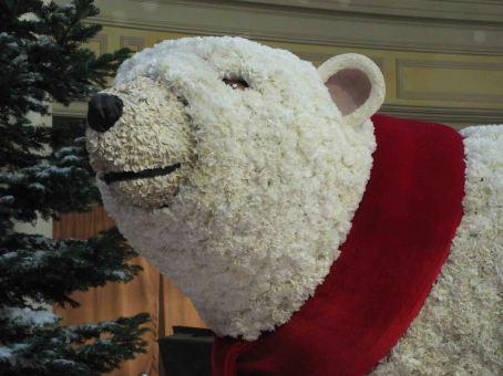 IMG_1049 bear