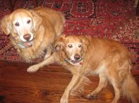 IMG_1179 dogs