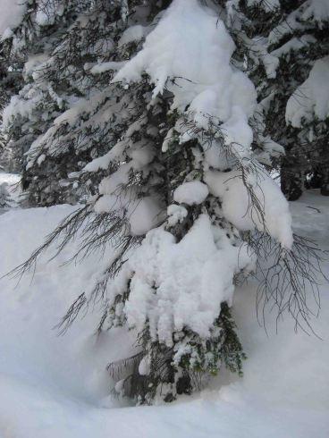 IMG_1192 tree