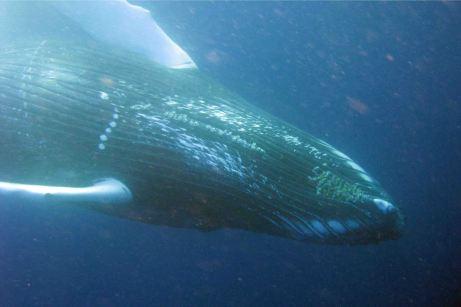 IMG_3110 whale