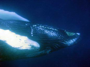 IMG_3113 whale