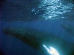 IMG_3157 whale