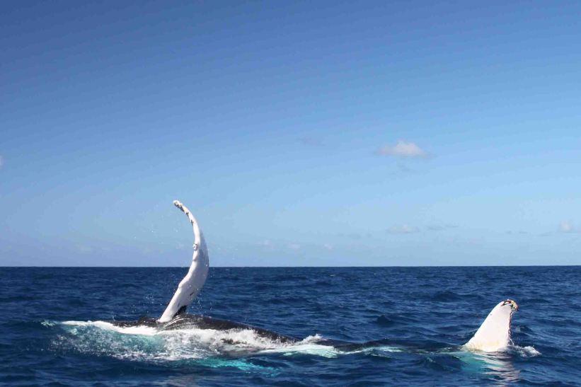 IMG_3292 white whale