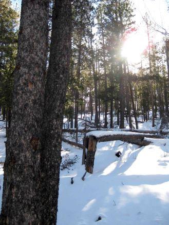 IMG_3257 woods