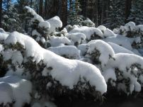 IMG_3283 snowcaps
