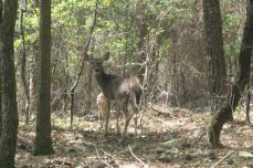 IMG_3393 deer