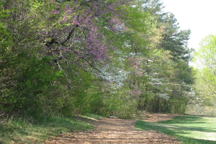 IMG_3396 trail