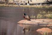 IMG_3866 ducks