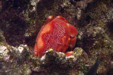 IMG_3698 crab