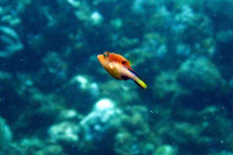 IMG_3745 trunkfish