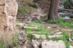 IMG_4129 steps