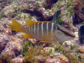 IMG_4140 fish