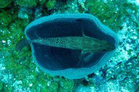 IMG_4157 sponge