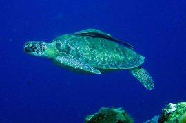 IMG_4163 turtle