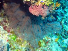 IMG_4182 coral