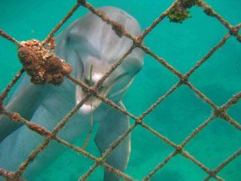 IMG_4266 dolphin