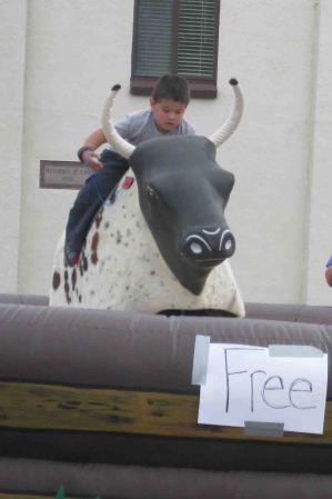 IMG_4271 bull