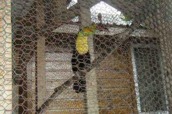 photo 2 (7) toucan