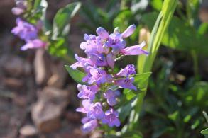 IMG_4161 flower