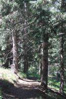 IMG_4166 trees
