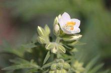 IMG_4185 flower
