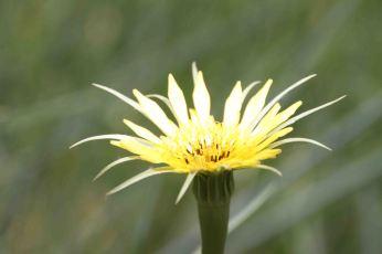 IMG_4188 flower