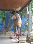IMG_4548 moose