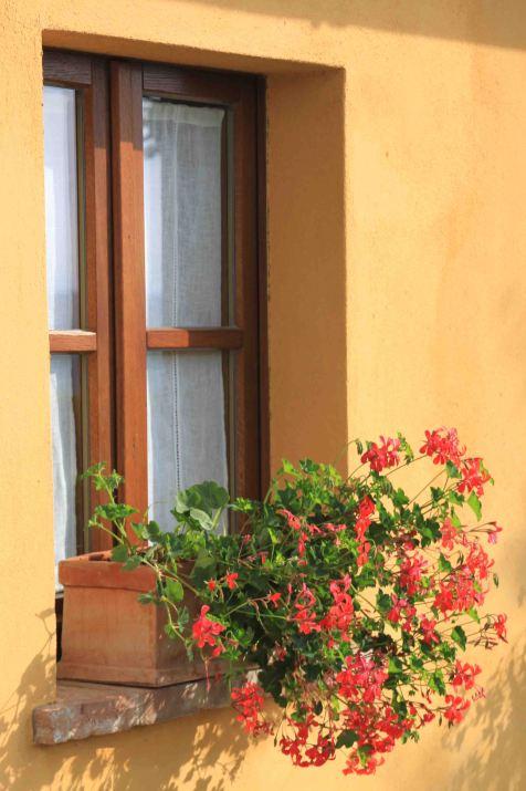 IMG_4279 window