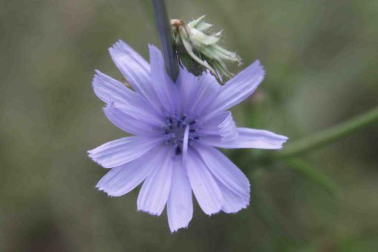 IMG_4368 purple flower
