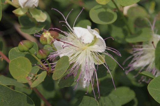 IMG_4388 flower