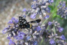 IMG_4761 moth