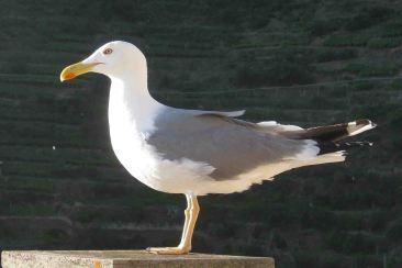IMG_5039 seagull