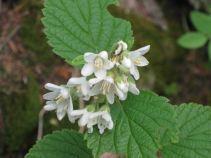 IMG_5395 flower