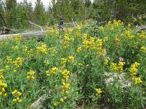 IMG_5405 wildflowers