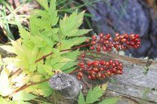 IMG_5514 berries
